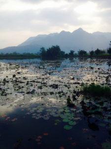 Lotus Flower Pond
